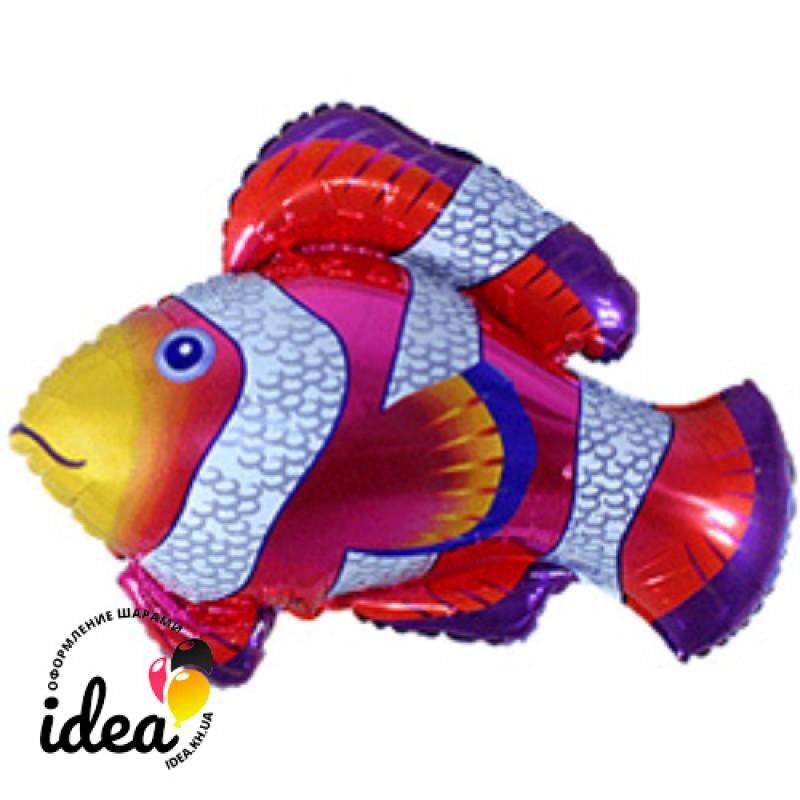Шар с гелием Рыба клоун 90см